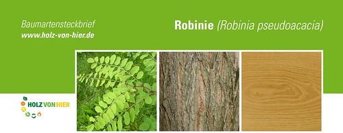 Robinie-Header