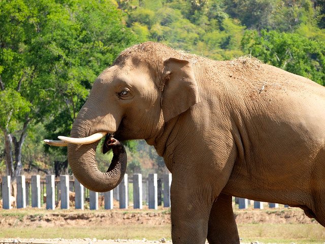Jungle Boy at Elephant Nature Park
