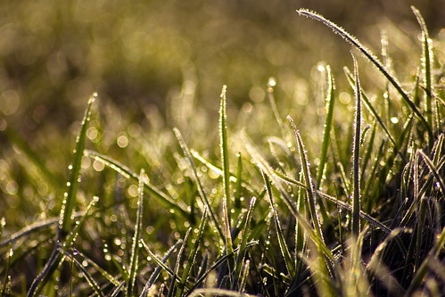 macro green beautiful grass sunrise canon spring raw farm sunday febuary 2015 irishlandscape icygrass