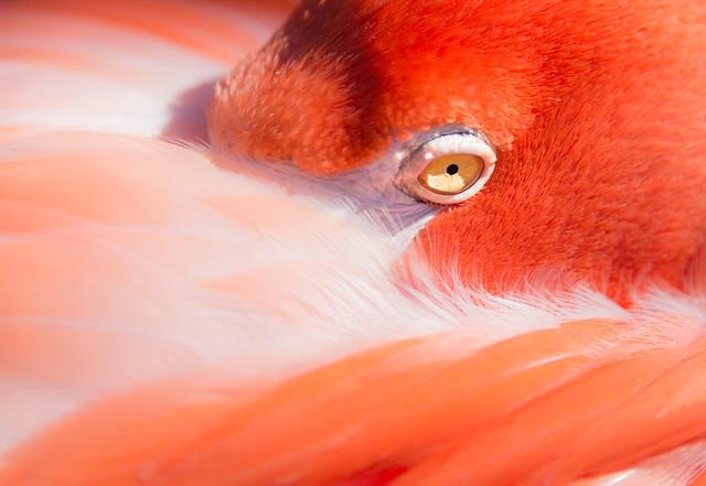 Longleaf.Photography - Eye Spy