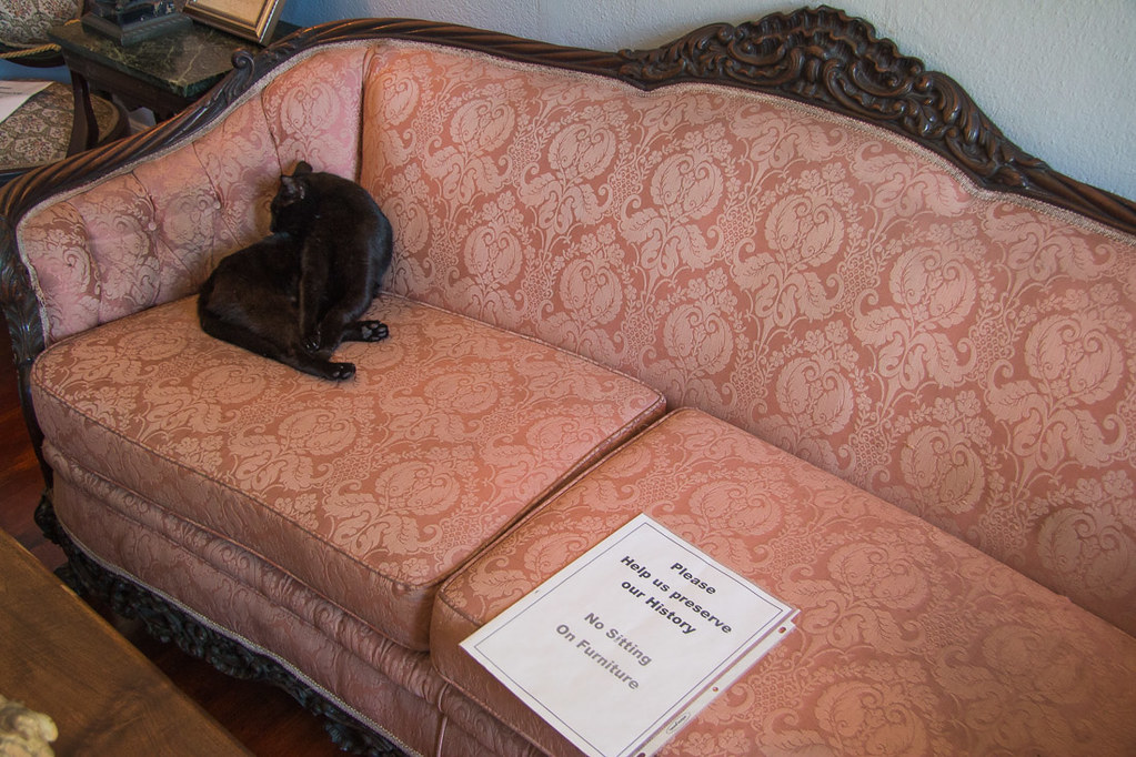 Cats sitting on furniture in Hemingway House Key West