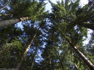 Zo loop je door een beuken bos en zo door een naaldbomenbos