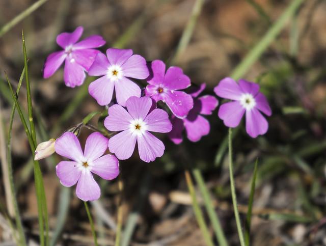 Flower 7-7D2-110516