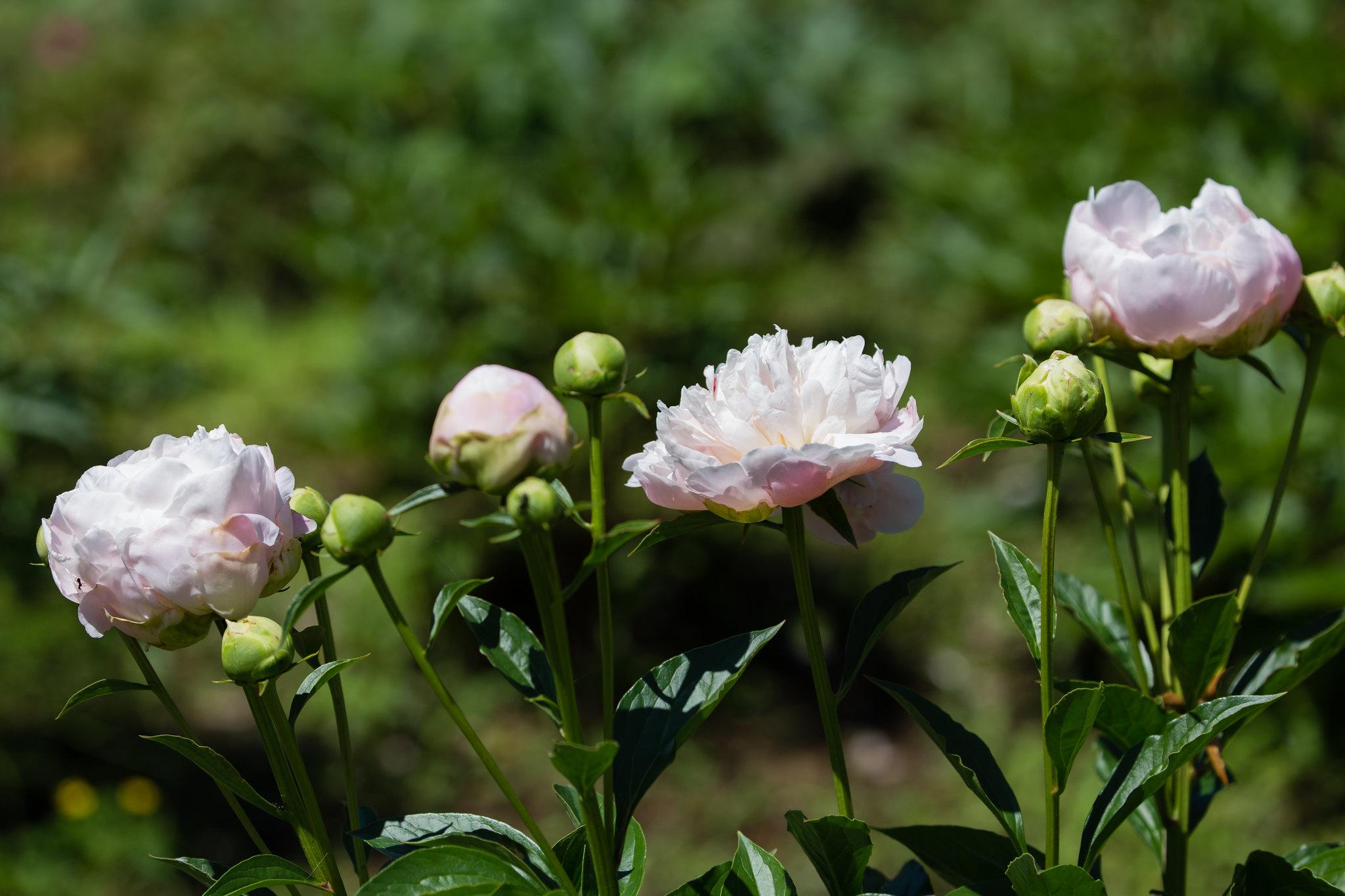 2016-05-18 神代植物公園 001-15