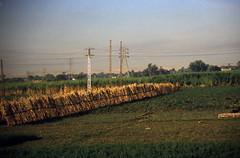 Ägypten 1999 (145) Busfahrt Assuan - Luxor