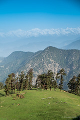 View from Chopta - Tungnath Trek, Uttarakhand