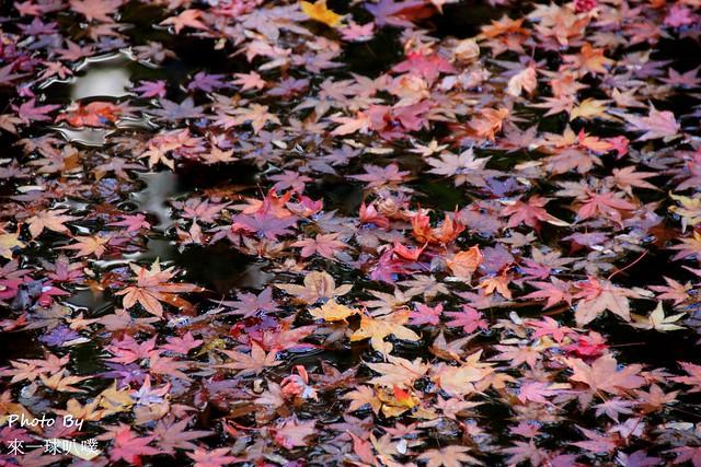 嵐山旅遊景點-常寂光寺33