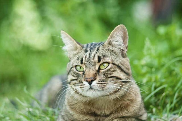 istock-20418589-cat-grass_custom-d5c66c20ecf64b9868c9a08d4057c132c0290e0d-s6-c10