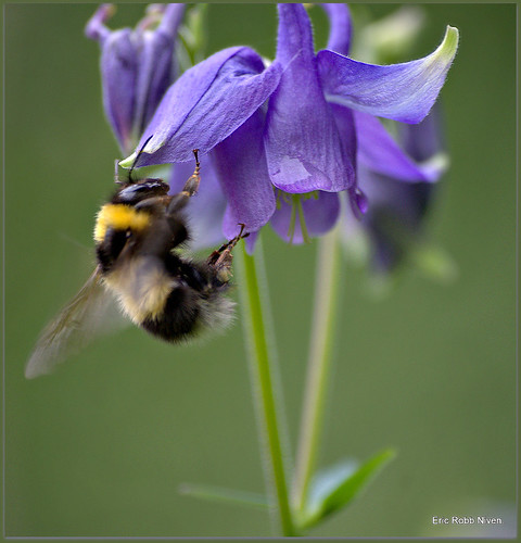 Busy Bumble Bee !!