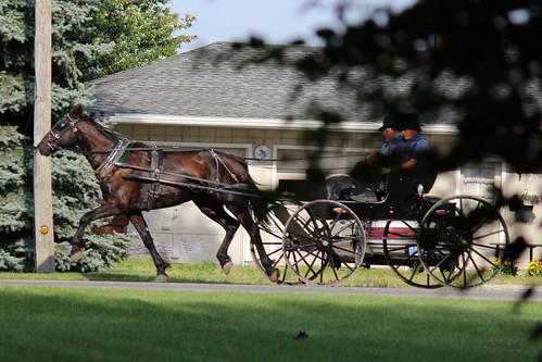 IMG_0187_Amish_Buggy