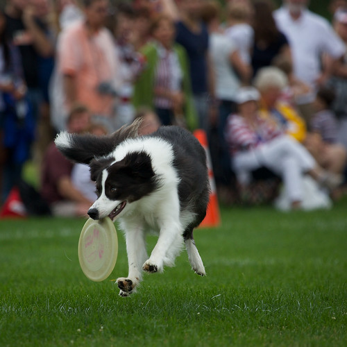 DublinSkyhoundz2013Web045