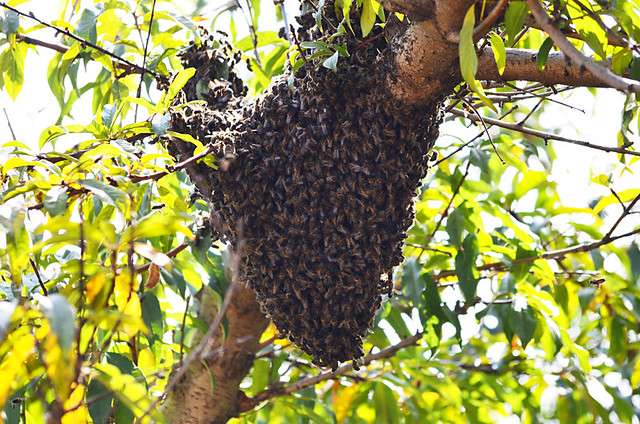 Bees Nest