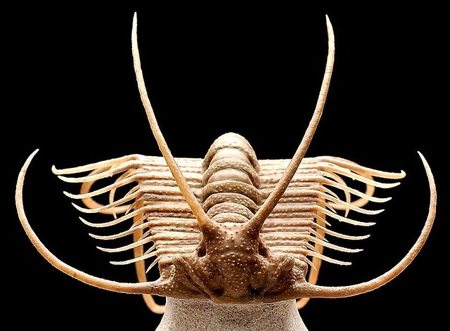 The Best Trilobite: A volunteer's utterly subjective examination