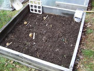 [;anting, potatoes, gardening, raised beds
