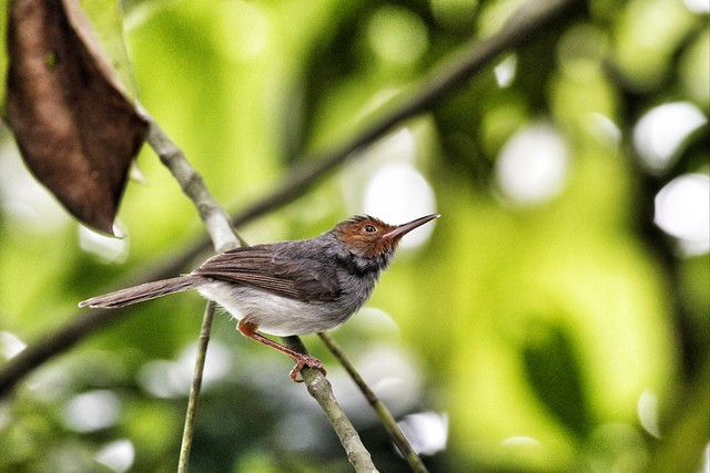 Bird on branch 4