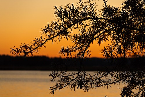 morning orange silhouette sunrise finland helsinki august 2013 canoneos7d adobelightroom4