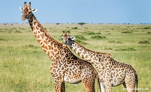 Kenia - Masai Mara 39