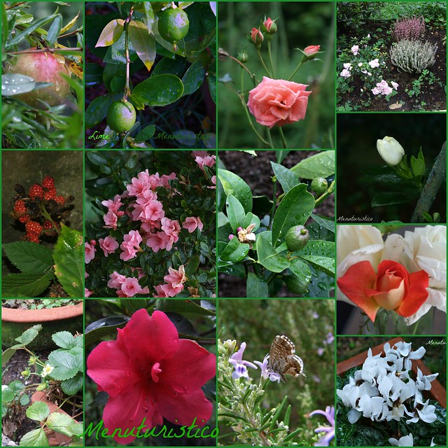 Collage  fiori