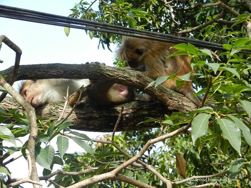 Наблюдаем обезьян из окна отеля