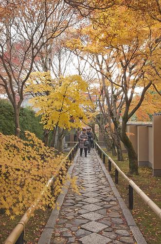 【写真】2013 紅葉 : 光悦寺/2013-12-02/IMGP4430