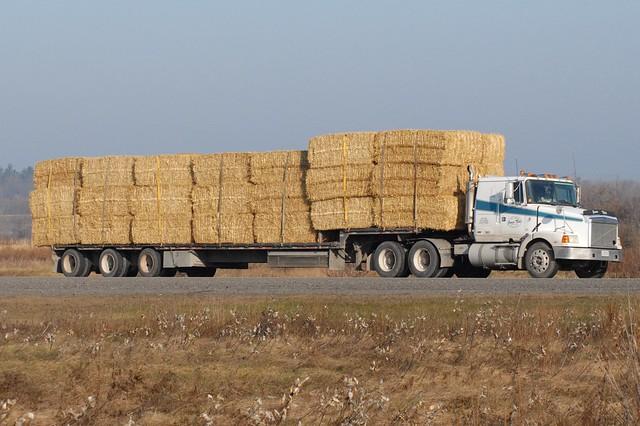 DSC_0036M Truck Ottawa, Ontario Canada 11232006 ©Ian A. McCord
