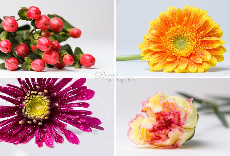 20140119-4UP-floral_btdd