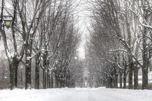 Snowy Road by Scerakor