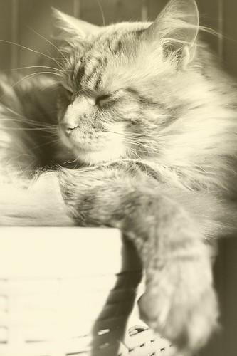 Zews asleep