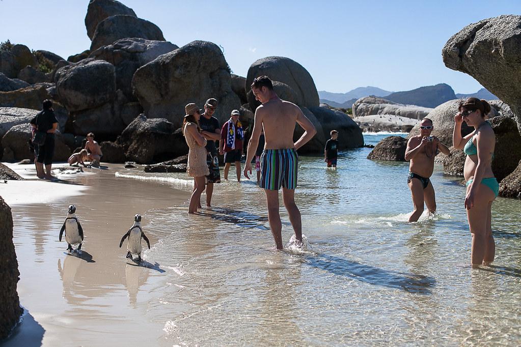 Boulders beach, Westkaap South Africa, 2013