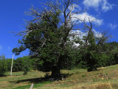 20130820 12 190 Jakobus Wolken Baum  Wiese