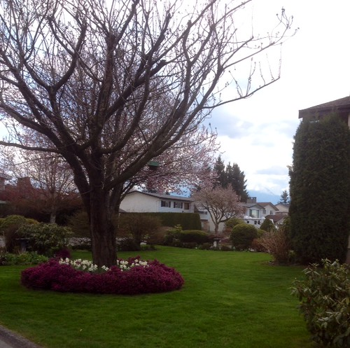 It's Spring in Chilliwack.