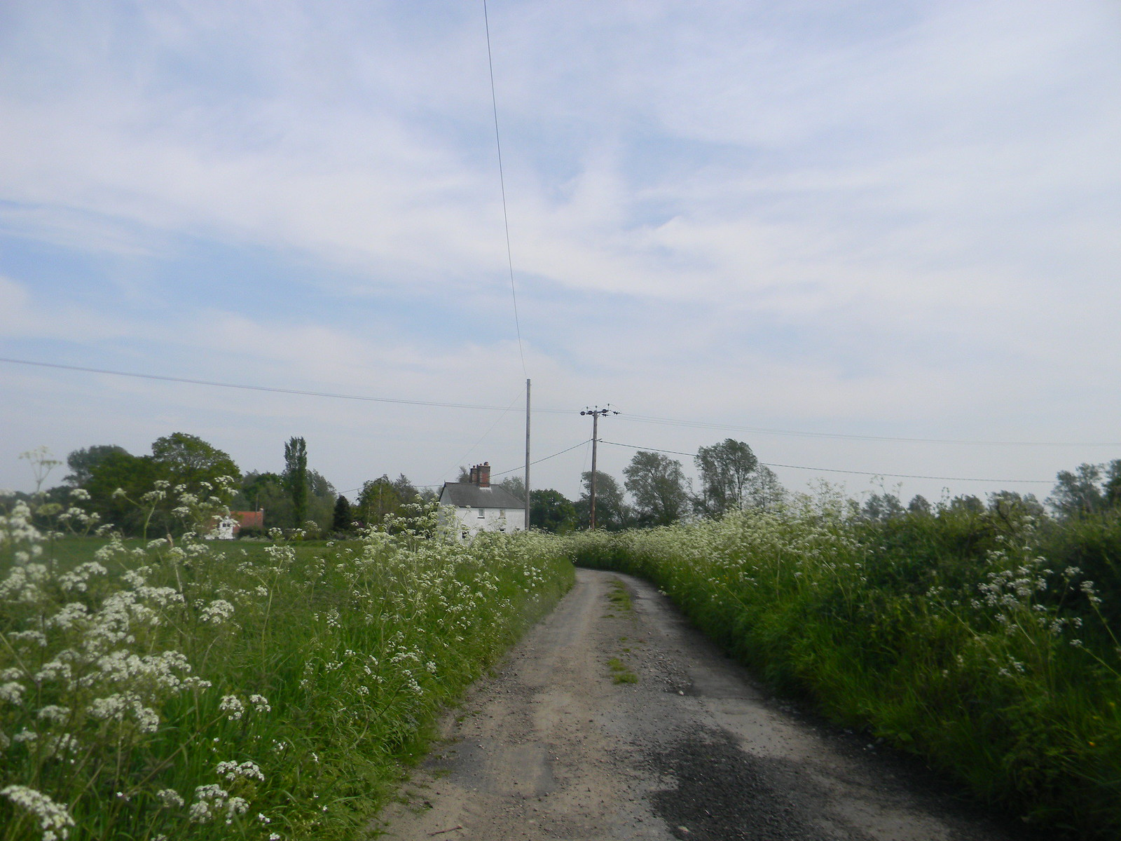 Cotage with cow parsley Manningtree Circular