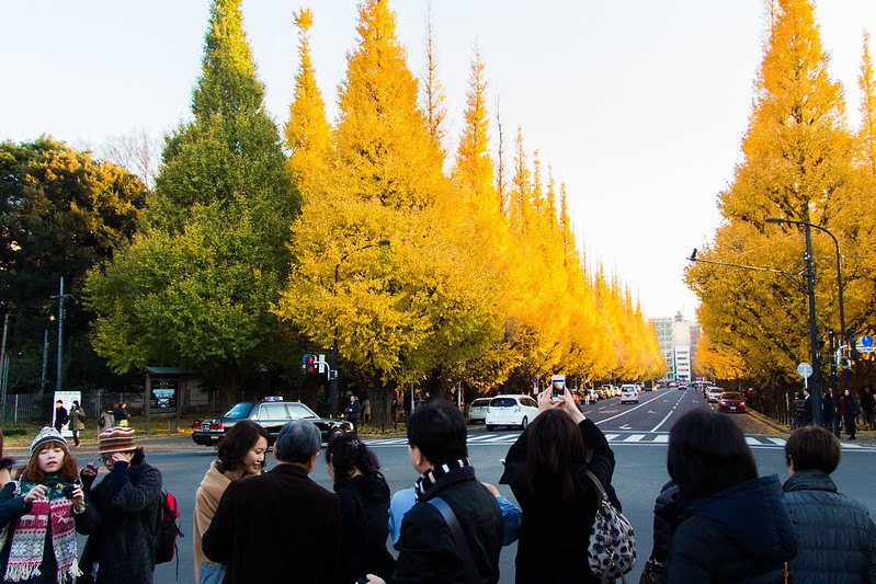 ginkgo avenue (aka icho namiki) - 12