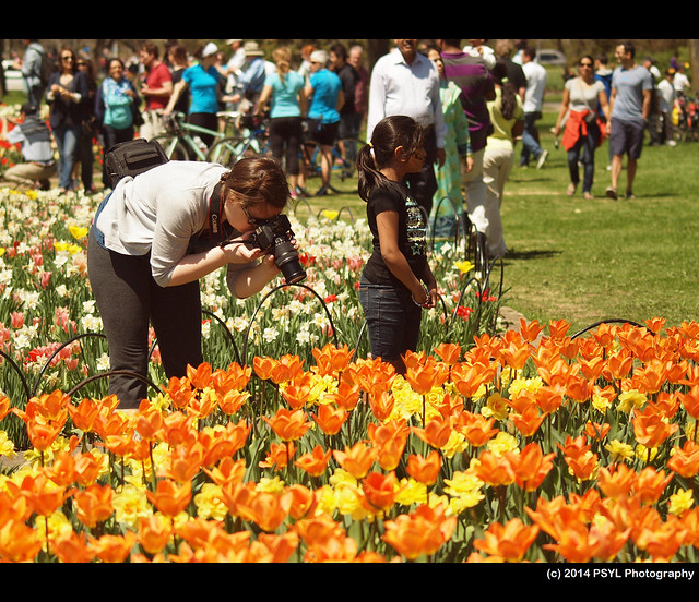 Photographer at Tulip Festival