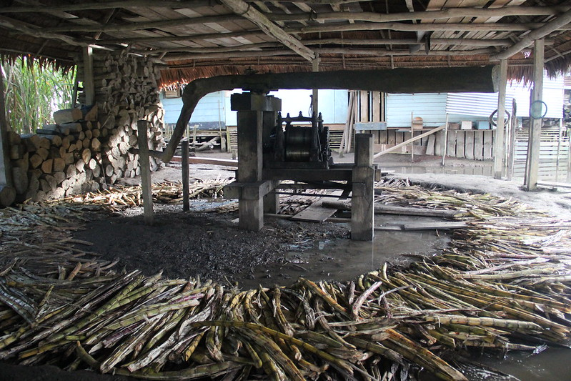 Sugarcane Distillery