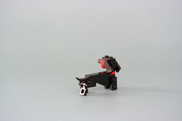 Michael the Dachshund 01