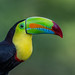 Keel-billed Toucan by Andy Morffew