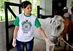 Juizado de Crimes Ambientais colabora com serviço veterinário