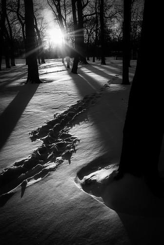 school trees winter shadow bw sun snow nature sunrise landscape dawn newjersey unitedstates nj eastbrunswick warnsdorfer