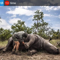 #Repost @time・Frikkie Rossouw of the SANParks' Environmental Crime Investigations Unit prepares the carcass of a rhino for postmortem in Kruger National Park, South Africa on Feb. 4, 2015. According to reports, 1215 rhinos were poached for their horns in