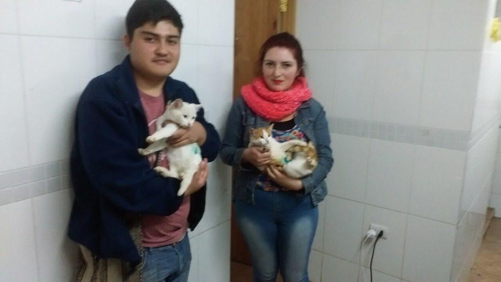 Esterilización de gatos y perros en Pelarco
