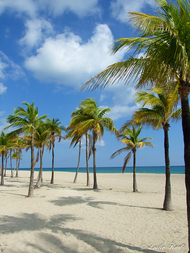 ocean trees beach sand fuji florida fort palm lauderdale fortlauderdale finepix