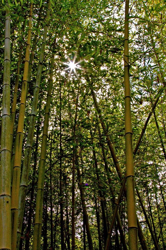 Bosco Di Bamb.Bosco Di Bambu Luana Bungaro Flickr