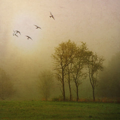 - spring mist in the morning field -