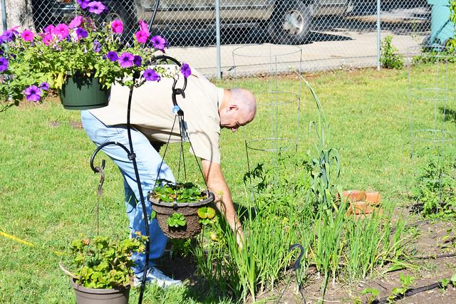 Dad's garden