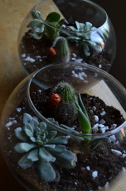 DIY Glass Terrarium 15