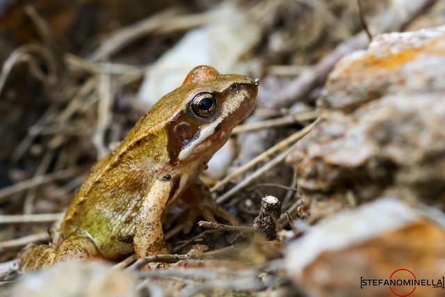 Little Frog Interested
