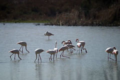 animal(1.0), fauna(1.0), crane(1.0), flamingo(1.0), bird(1.0), wildlife(1.0),