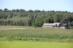 Anieliny village