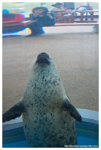 Aquarium #07